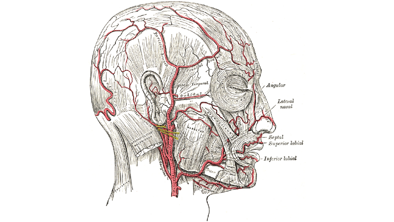 Temporal Arteritis Dont Lose Sight Of The Diagnosis Physician